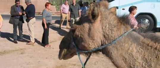 Marokko 2008: ORF Hörer Reise